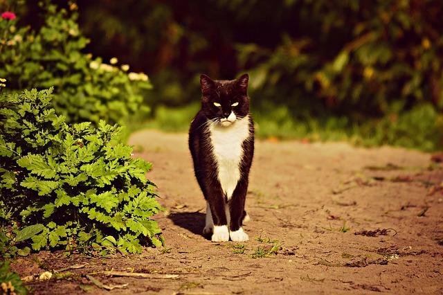 Kočka v zahradě