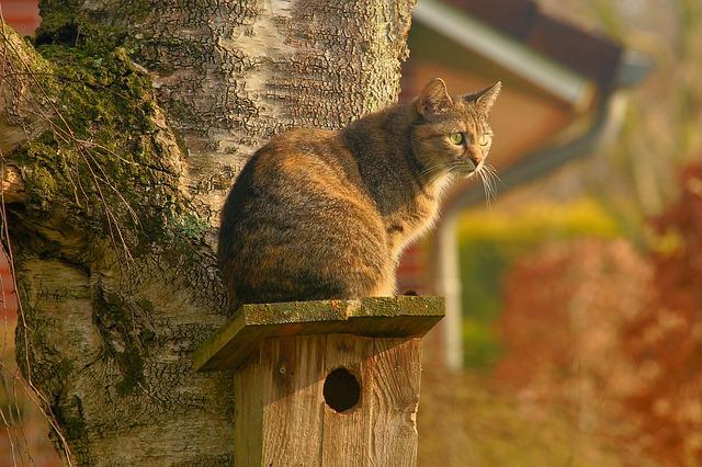 Kočka na budce pro ptáky