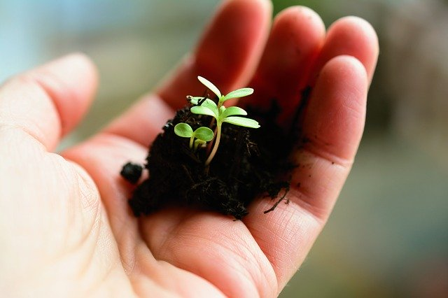 rostlinka v ruce.jpg